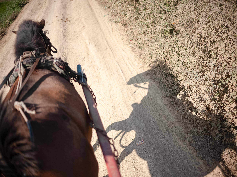 在城市凝视马的时刻|身边的动物