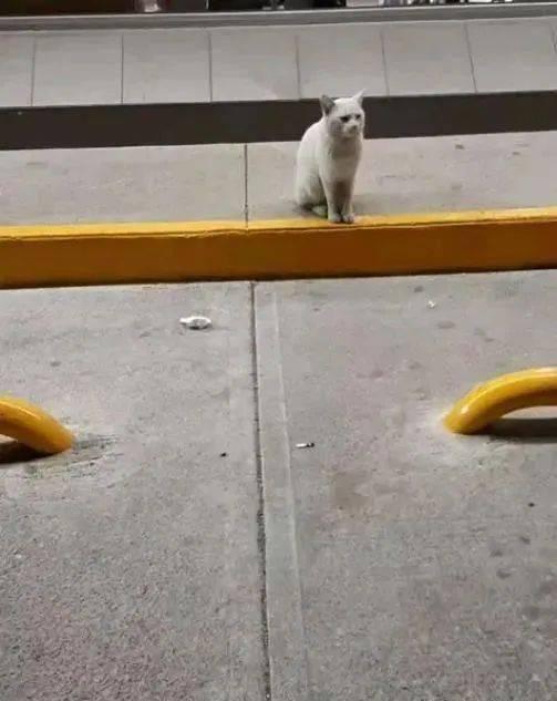 流浪猫领路人进便利店,收编1年后反转结局