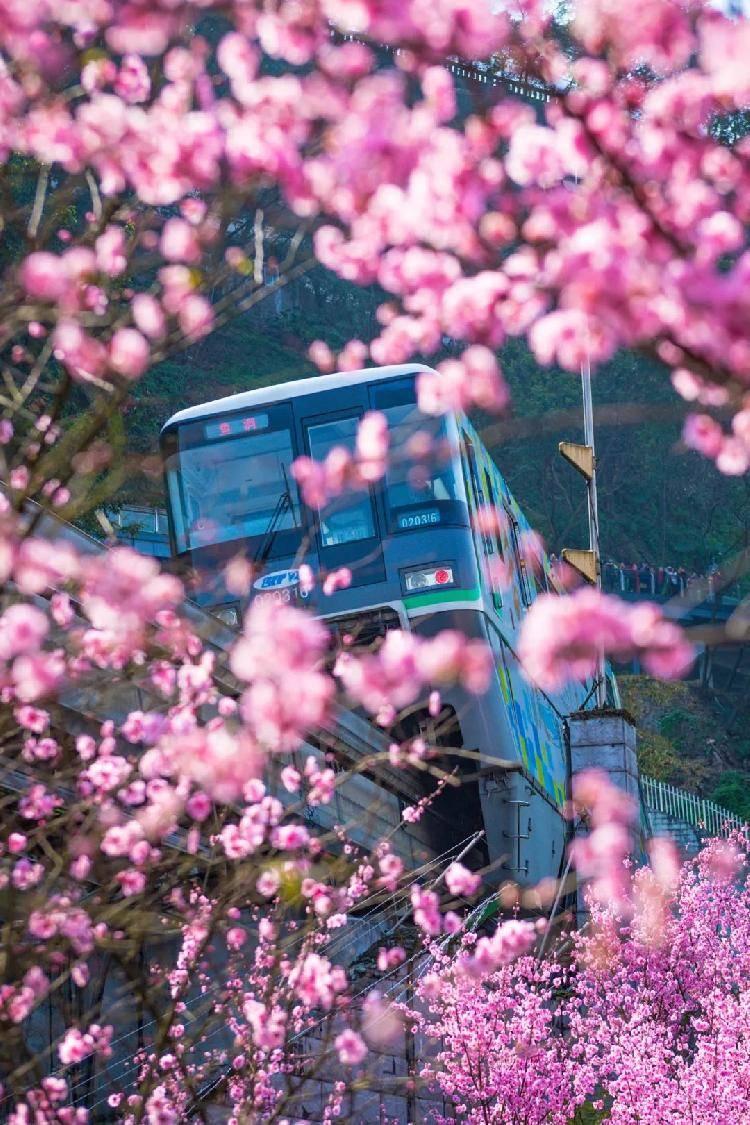 山城春色:每一幅美得都很重庆