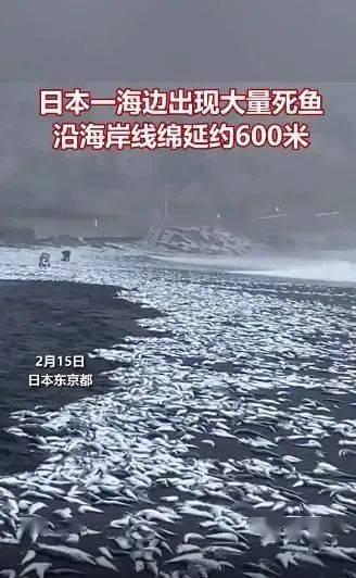 日本海滩涌现上万条死鱼,绵延数百米!科学家预警,地球气候正坠入不可逆临界点,留给我们的时间不多了...