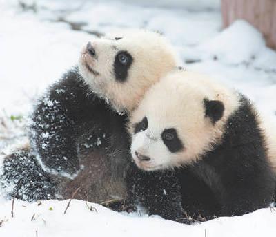野生动物名录32年来首次大幅调整:新增517种,物种保护升级