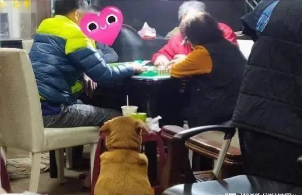 大人围在夜灯下打麻将,结果一坨沉重背影出现在麻将桌旁!