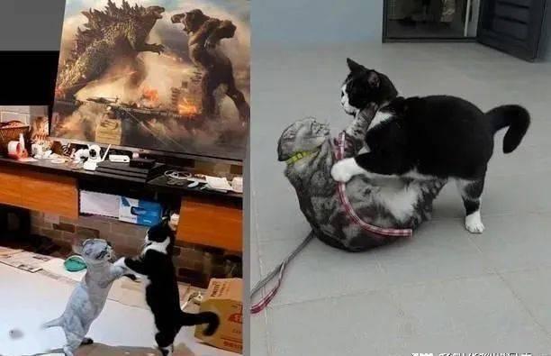 2喵互揍意外撞图《哥吉拉大战金刚》,画面对比电影图亮了!