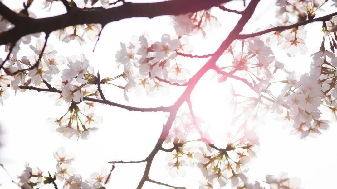 七星彩:26个春天的成语,原来都出自诗词 网络快讯 第6张