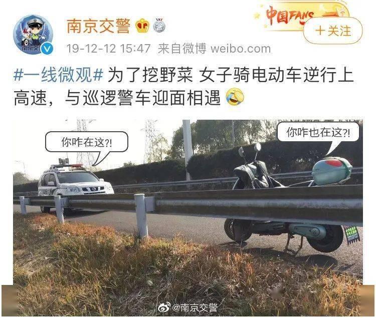 又双����到了南京人出门挖野菜的季节了!
