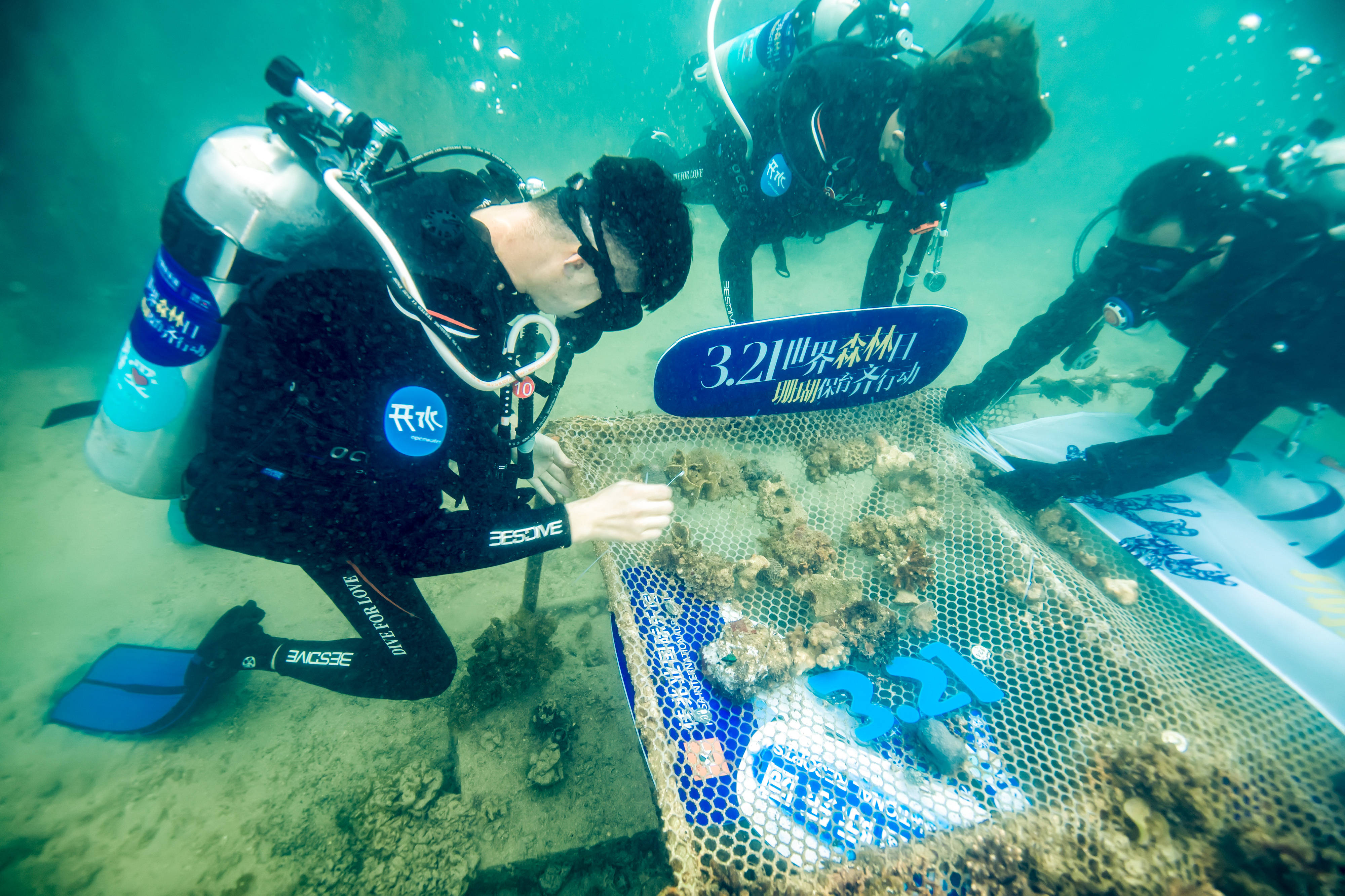 """保育""""海底森林"""" 海底扶植珊瑚"""