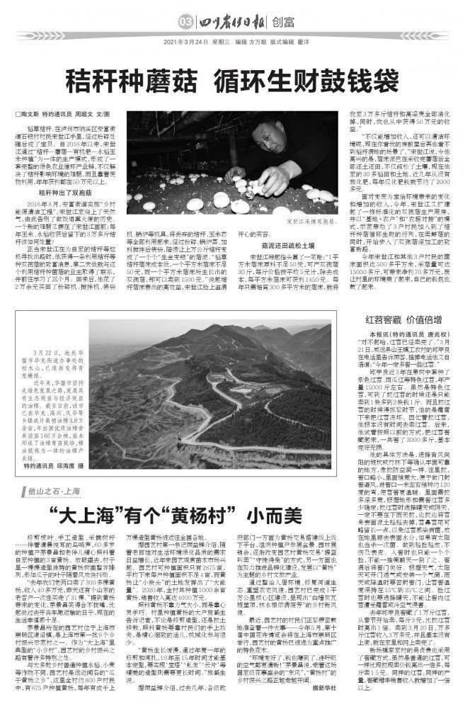 """""""大上海""""有个""""黄杨村""""小而美"""