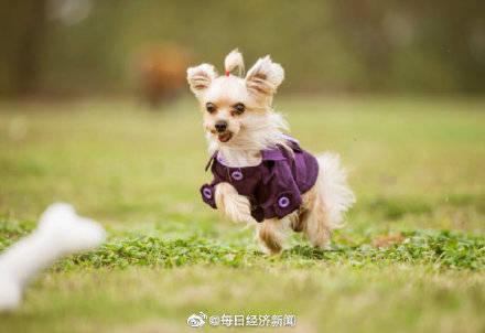 韩国4月起处罚未买猛犬保险犬主,最高可罚300万韩元