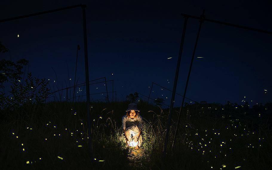 草堂读诗|赏析:衣米一《萤火虫》