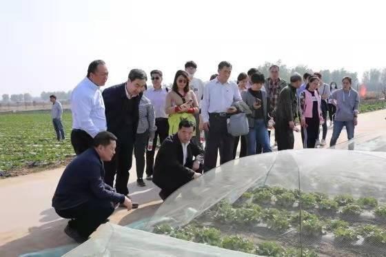 北京叶菜创新团队裕农综合试验站召开冬奥保供基地观摩会