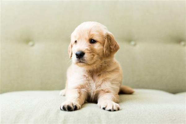 江苏传递宠物盲盒事件:拟对无锡中通处以3万罚款,送13只活体动物死亡