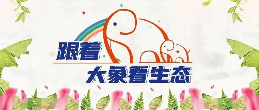【跟着大象看生态】美丽家园,你我共守护!