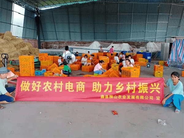 广西乐村淘益农活动助推藤县香水柠檬销售