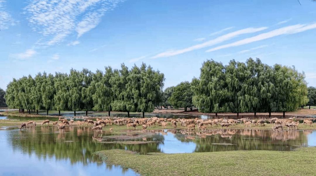 转起来!北京经开区生物多样性调查科学探索夏令营开始招募,就等你啦!