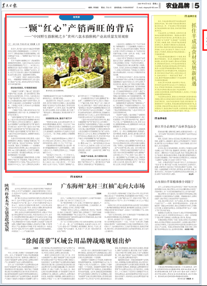 """一颗""""红心""""产销两旺!《农民日报》点赞贵州六盘水猕猴桃产业发展"""