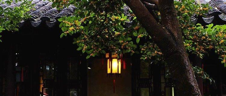 一年秋意浓,满城桂花香。这些城市承包了秋日最清幽的桂花香