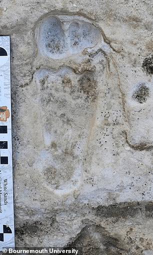 美公园惊现2.3万年前人类脚印,或是美洲人类活动最早证据