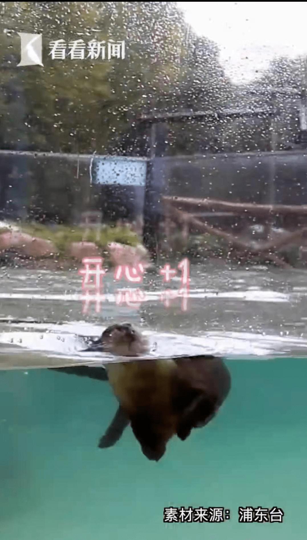 """恒宏首页上海动物园一水獭帮游客水池捞手机,获赠锦旗:""""拾金不昧暖人心"""" (图2)"""