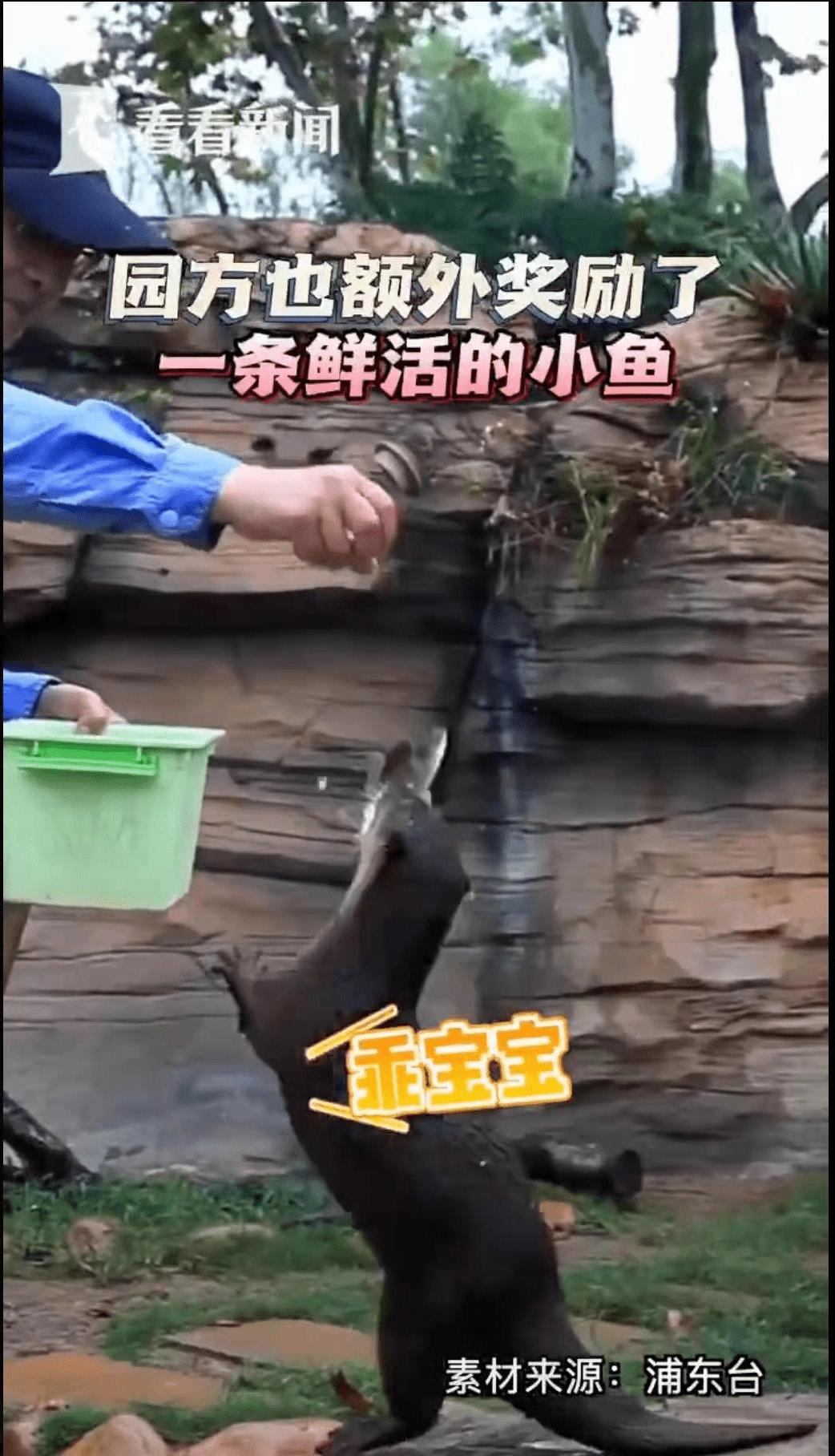"""恒宏首页上海动物园一水獭帮游客水池捞手机,获赠锦旗:""""拾金不昧暖人心"""" (图4)"""