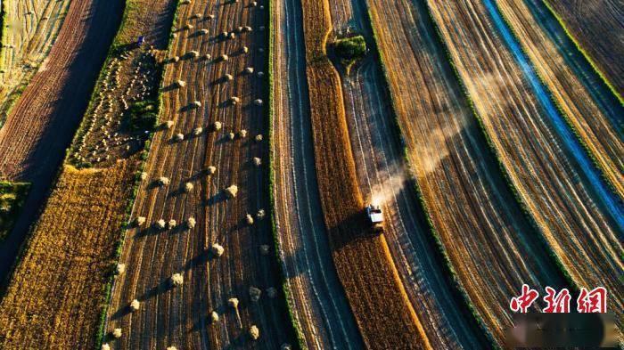 京基智农前三季度净利同比增长 甘肃过半种植户实现半机械化