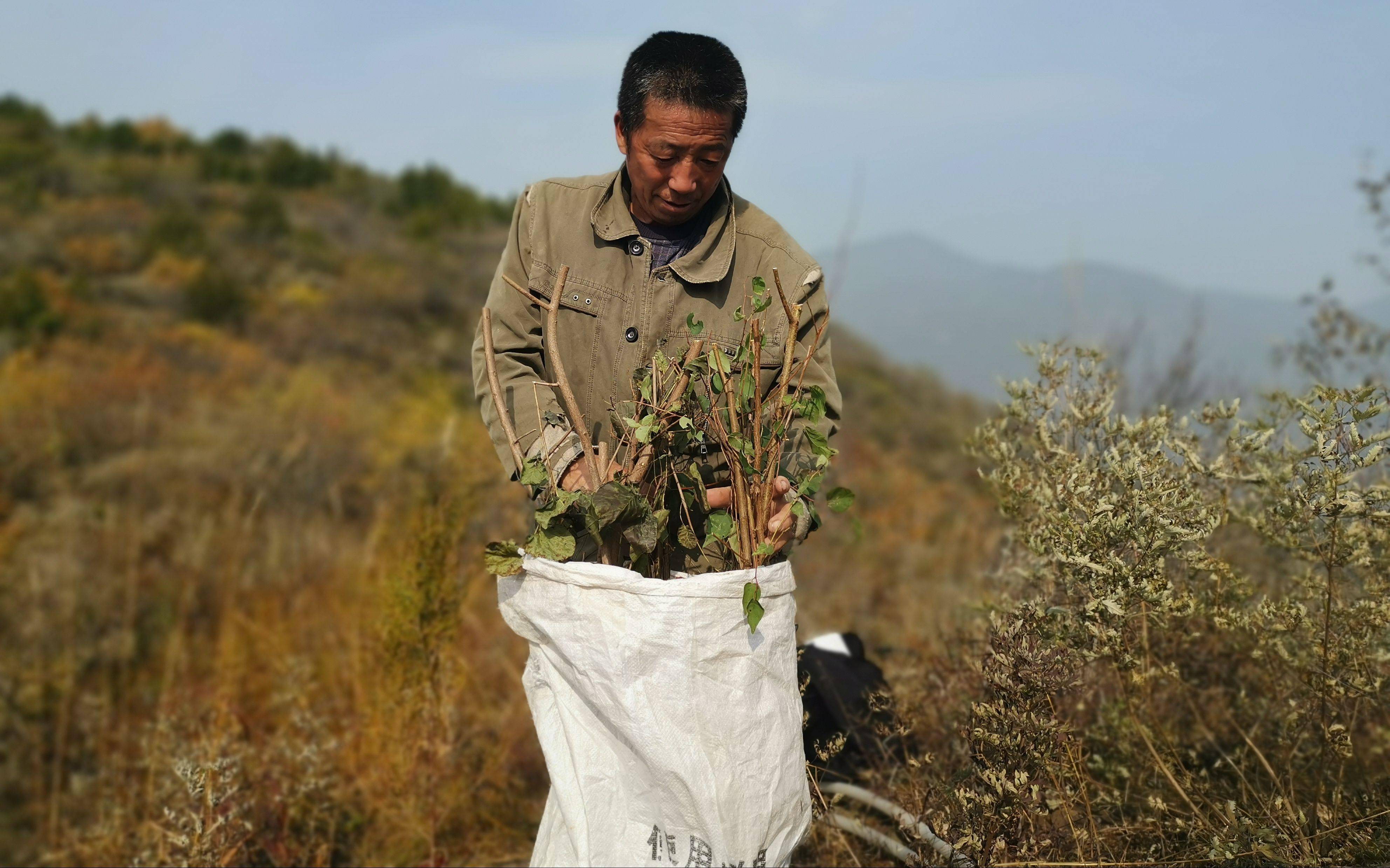 京西深山种树人:背着树苗爬坡 最远要走五六公里山路
